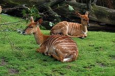 Free Two Fawns At The Berlin Zoo Royalty Free Stock Photography - 1592177