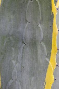 Free Nature Closeup Stock Image - 1592611