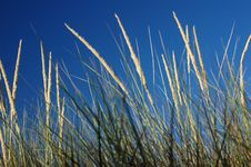 Marram Grass Stock Photos