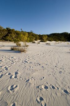 Free Footprints On Sand 2 Royalty Free Stock Image - 1593956