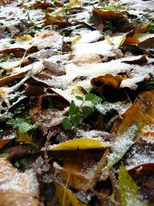 Free Fresh Snow Royalty Free Stock Photo - 1594395