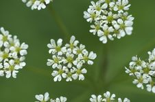 Free White Flowers Stock Images - 1594464
