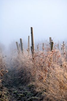 Free First Frost Royalty Free Stock Photo - 1596095