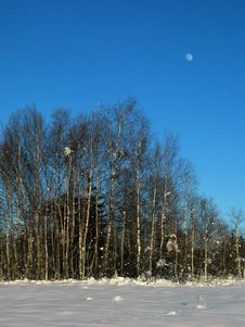 Winter-Birches In Snowed-In Meadow - And The Moon Stock Photos