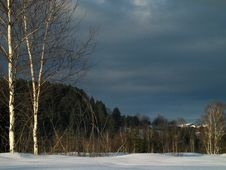 Free Winter-Birches In Snowy Meadow Stock Photography - 1596742
