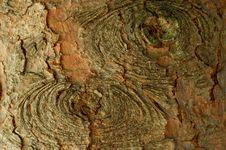 Free Pine Tree Texture Stock Photography - 1597322