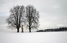 Free Trees On Field Royalty Free Stock Images - 1598469