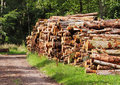 Free A Pile Of Logs On A Woodland Track Royalty Free Stock Photos - 15901928