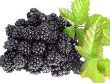 Free Garden Blackberries Royalty Free Stock Photos - 15901288