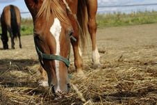 Horses And Hay Royalty Free Stock Photos