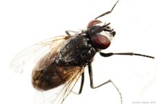 Free The Fly Royalty Free Stock Photo - 15904425