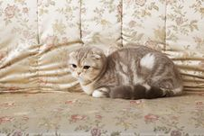 Free Cat Sitting On A Beautiful Vintage Couch Stock Photos - 15904503