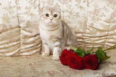 Free Cat Sitting On A Beautiful Vintage Couch Royalty Free Stock Photo - 15904555