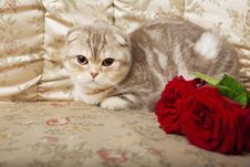 Free Cat Sitting On A Beautiful Vintage Couch Stock Image - 15904601