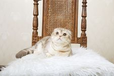 Free Cat Sitting On A Beautiful Vintage Chair Stock Photography - 15904642