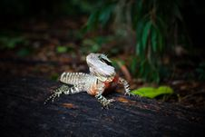 Free Colorful Lizard Royalty Free Stock Photos - 15905658