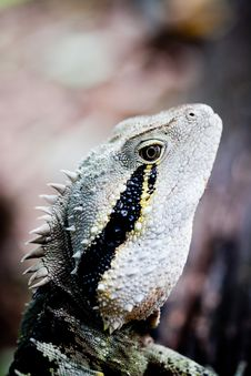 Free Colorful Lizard Stock Photo - 15905670
