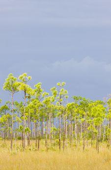 Free Everglades National Park Royalty Free Stock Image - 15906326