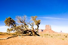 Free Monument Valley National Park Royalty Free Stock Image - 15906456