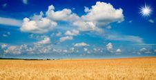 Free Amazing Yellow Field Of Wheat. Royalty Free Stock Photo - 15906555
