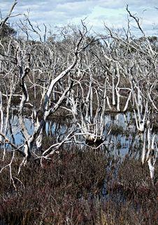 Free Estuary Waterways Royalty Free Stock Photos - 15906558