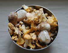 Free Fresh Mushrooms Stock Image - 15907311