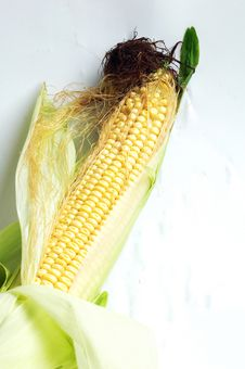 Free Corn Royalty Free Stock Photos - 15907358