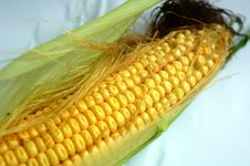 Free Corn Royalty Free Stock Images - 15907389