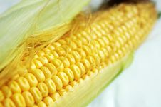 Free Corn Stock Photography - 15907482