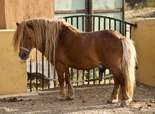 Free Pony Stock Image - 15907671