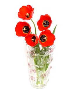 Free Red Tulips In A Vase, Stock Photos - 15908993