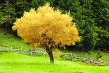Free Lonely Tree Landscape - Vibrant Colors Stock Photos - 15909193