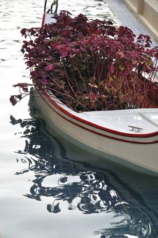 Free Flower In Boat Stock Photography - 15909542