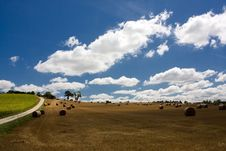 Free Scenic View On Summer Agricultural Landscape Royalty Free Stock Photography - 15909547
