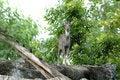 Free Goral Stock Image - 15913421