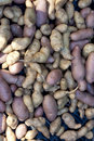Free Potatoes Royalty Free Stock Photos - 15919268