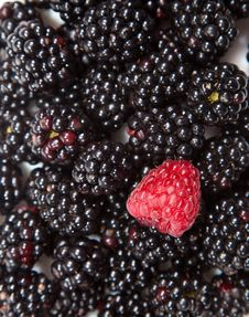 Composition Of Black And Red Raspberries Royalty Free Stock Photos
