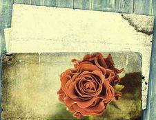 Free Beautiful Rose Royalty Free Stock Photos - 15911588