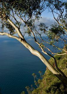 Free Seascape With Eucalyptus Tree Stock Image - 15913291