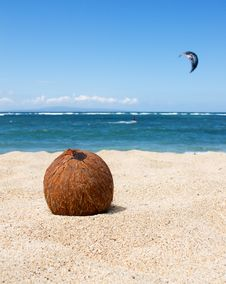 Free Coconut Royalty Free Stock Images - 15913379