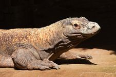 Free Komodo Dragon Stock Photos - 15913393