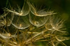 Free Dandelion Stock Photography - 15914092
