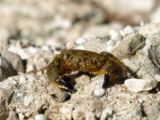 Free Crab Stock Photos - 15915053