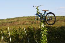 Free Vineyard Stock Photos - 15916093