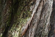 Free Bark Stock Images - 15916234