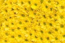 Free Flowers Pattern Royalty Free Stock Images - 15918449
