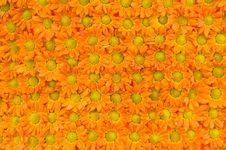 Free Flowers Pattern Royalty Free Stock Photo - 15918475