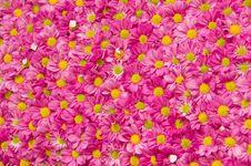 Free Flowers Pattern Royalty Free Stock Image - 15918506