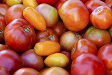 Free Tomatoes Stock Photos - 15919263