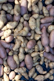 Free Potatoes Royalty Free Stock Photos - 15919268